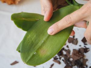 Krankes Blatt Orchideen
