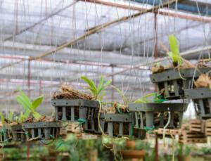 Orchideenpflege für Anfänger