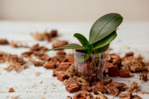 Orchideensubstrat selber mischen