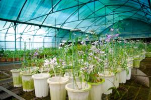 Raumklima für Orchideen