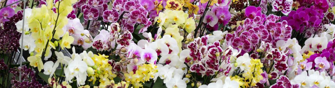 Orchideenarten Header